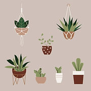 Plants and planters.jpg