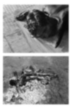 cremations 2  copy.jpg
