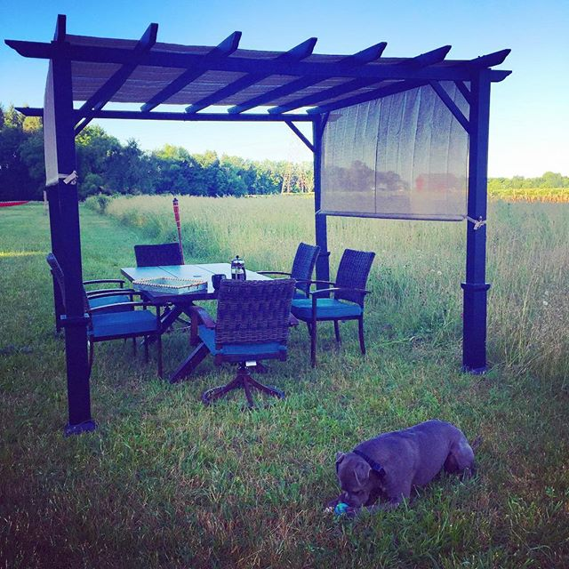 Good morning from BlueSky and Yoga House ✨💫🌞🐾#yogafarm #yoga #yogaretreat #puremichigan #farm #wi