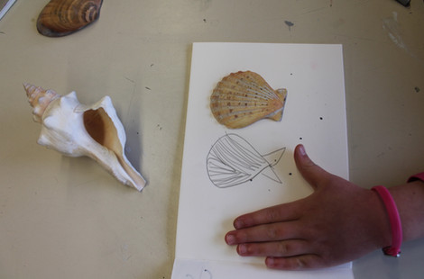 Shell drawing.jpg