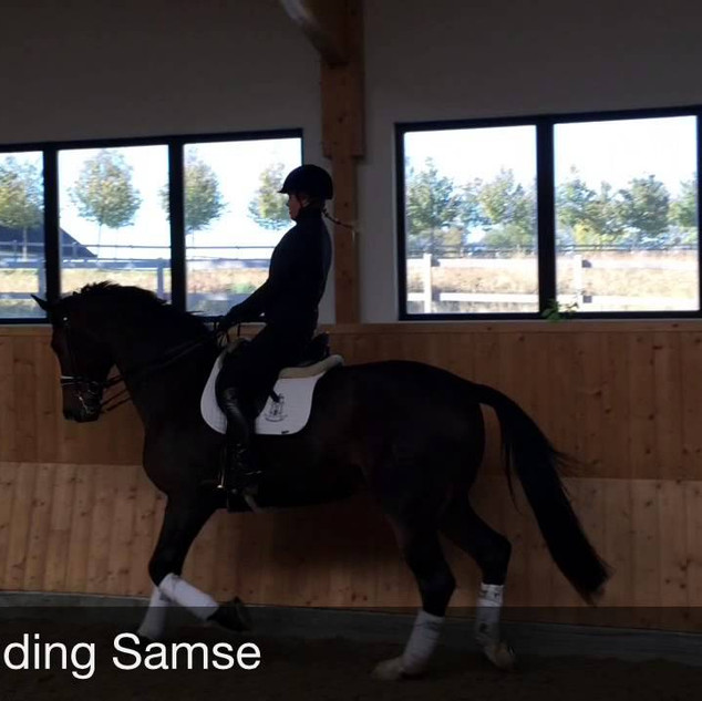 FEATURED TRAINER DRESSAGE CLINIC.COM