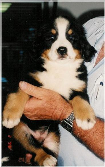 Zeigen Oak Woodland Puppy.jpg
