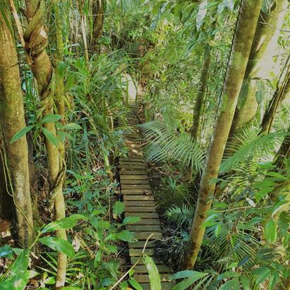 The bush walk
