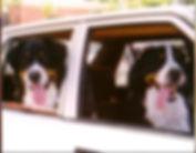 AMR's Dogs.JPG