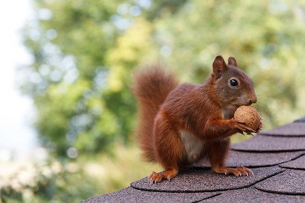 squirrel-2996738_1280.jpg