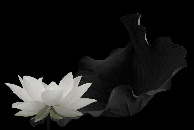 lotus (6).jpg