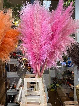 Pampas roze