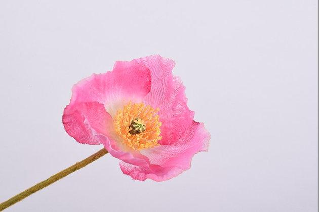 Klaproos roze light