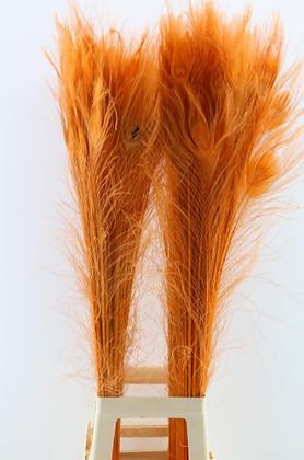 Pauwenveer Oranje