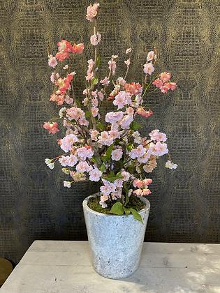 Árbol en flor con maceta