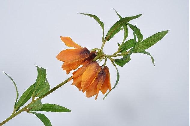 FRITILLARIA Oranje