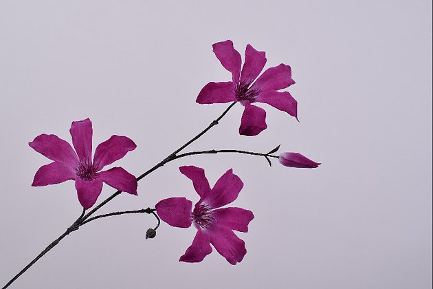 Clematis paars roze