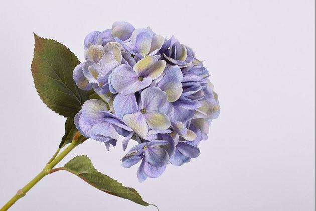 Hortensia - 4 colores