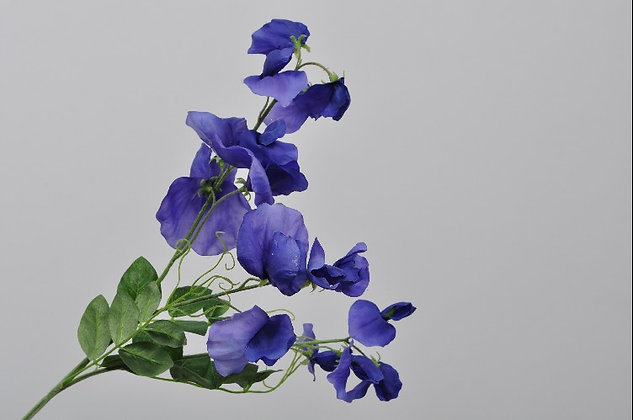 Lathyrus blauw
