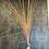 Thumbnail: Hierba rosa silka