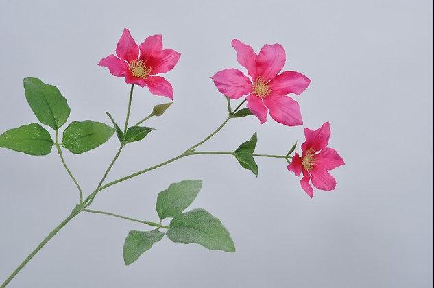 Clematis roze