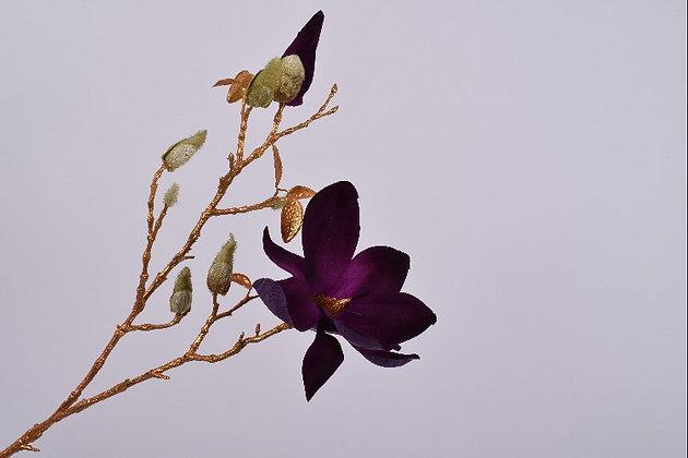 Magnolia paars goud