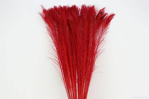 Pauwenveer Rood