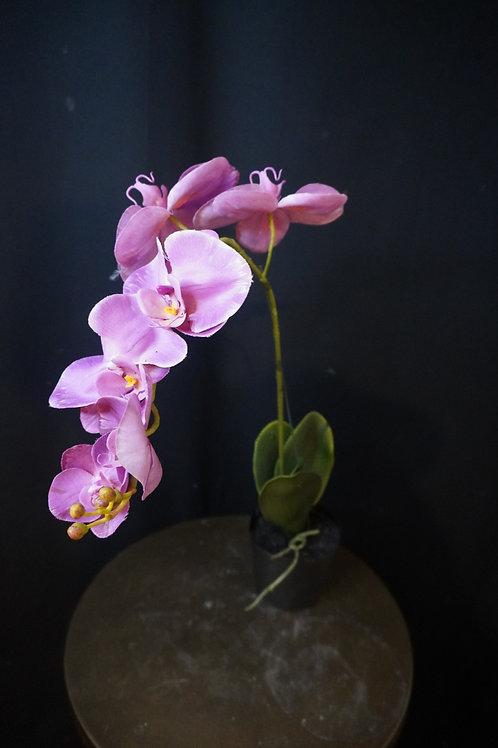 Roze orchidee zijde