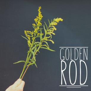 Golden Rod.jpg