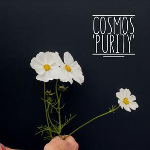 Cosmo Purity.jpg