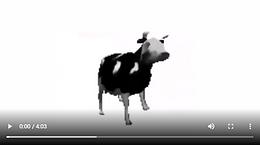 Full polish cow