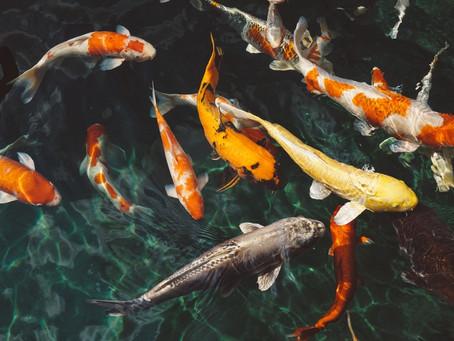 推免費AI助網站漲流量,新創禾多用「魚幫水、水幫魚」模式獲千萬投資