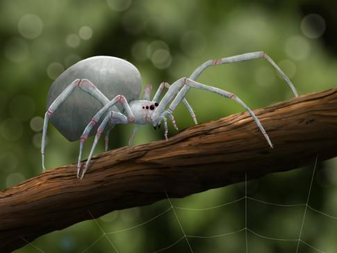 white_spider web.jpg
