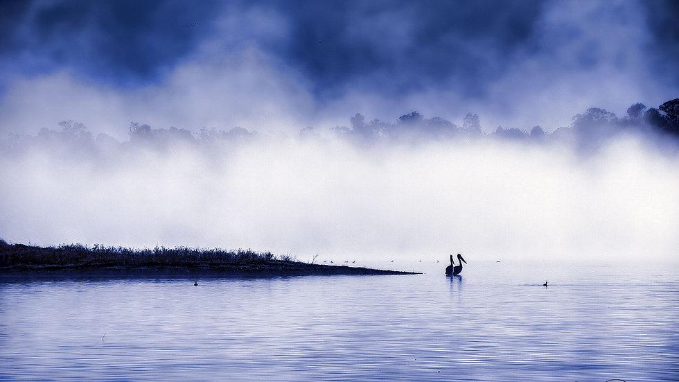 Pelicans Of Lake Coolmunda