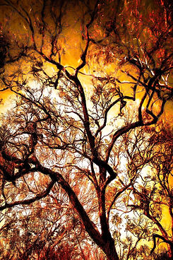 Burning Tree Resize.jpg