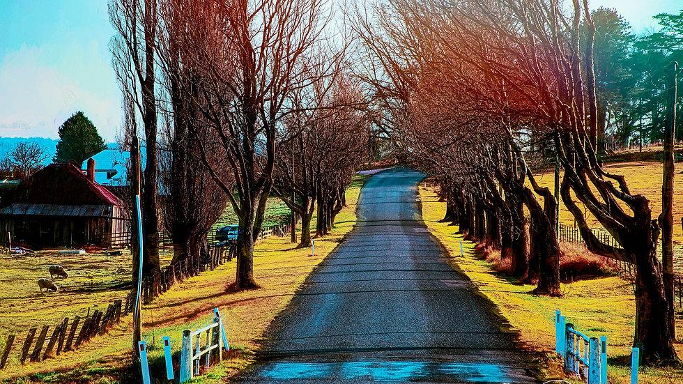 Tenterfield Road