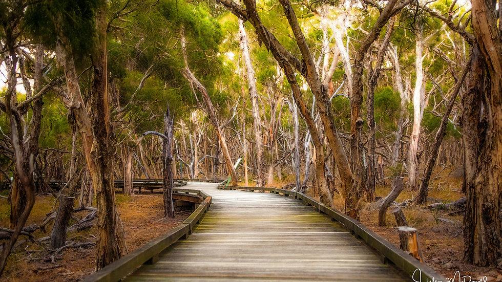 Tea Tree Walk