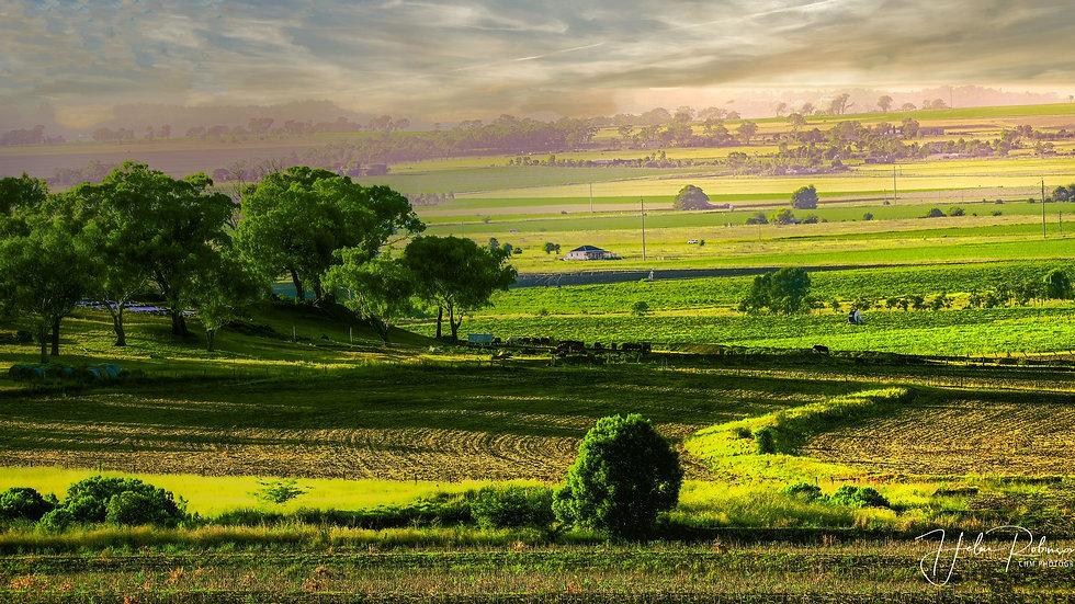 Elphinstone Valley