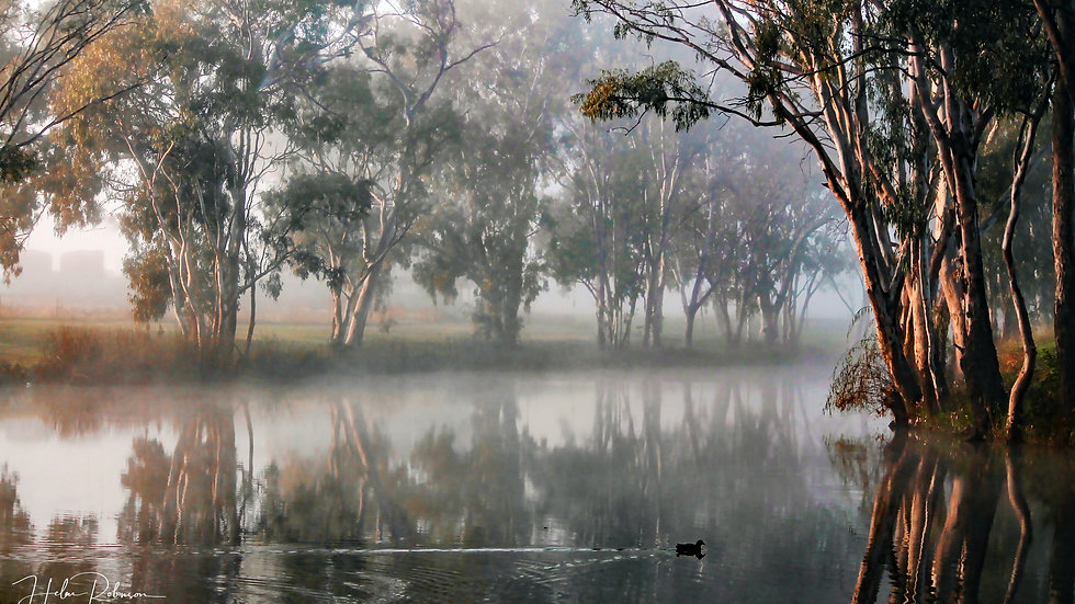 Early Morning, The Condamine