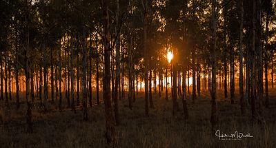 Blazing Sunrise.jpg