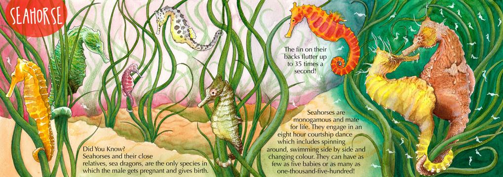 Childrens Sealife Fact Book - Seahorse