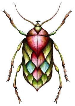 Artichoke Beetle