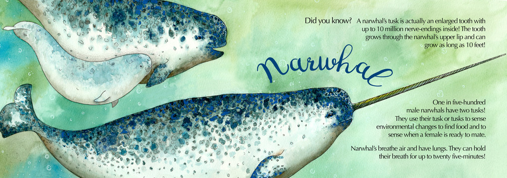 Childrens Sealife Fact Book - Narwhal