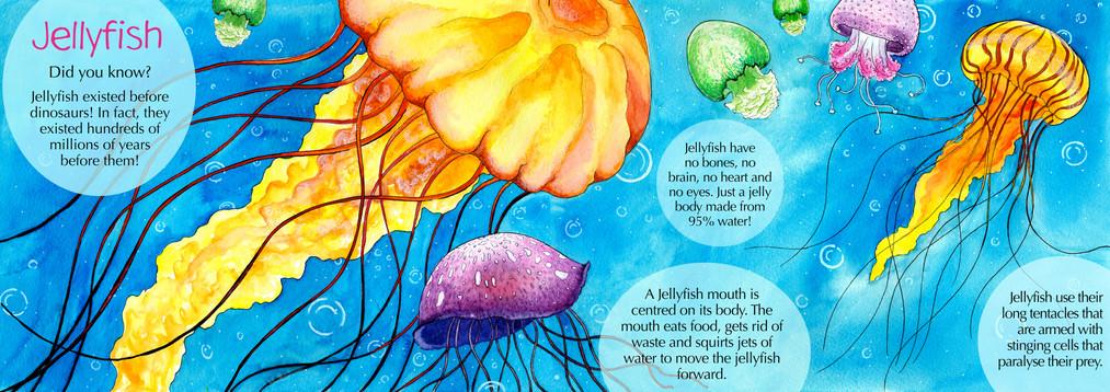 Childrens Sealife Fact Book - Jellyfish