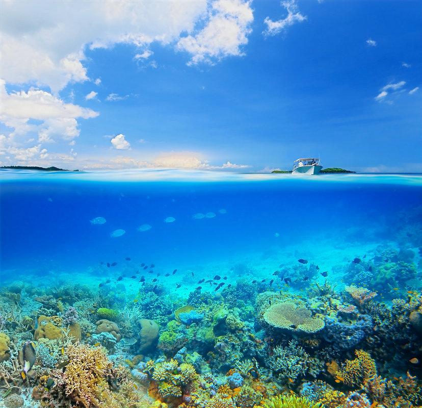 Coral%20Reef%20Island_edited.jpg