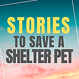 Stories to Save a Shelter Pet