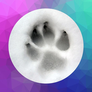 Custom Paw Print Ornament - $10