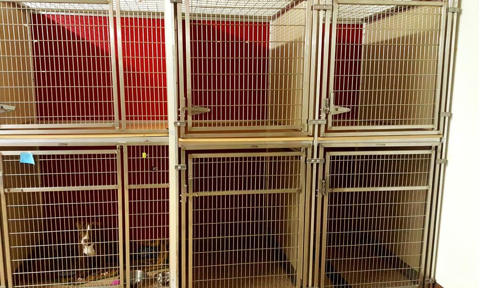 Large Dog Kennel Area