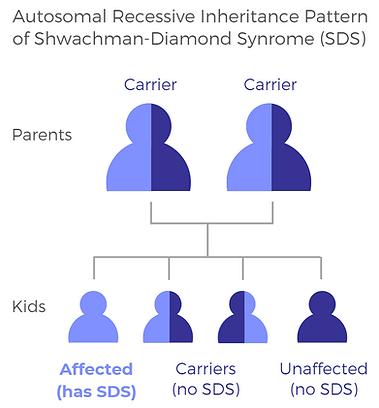 SDSA_Autosomal Recessive Inheritance of