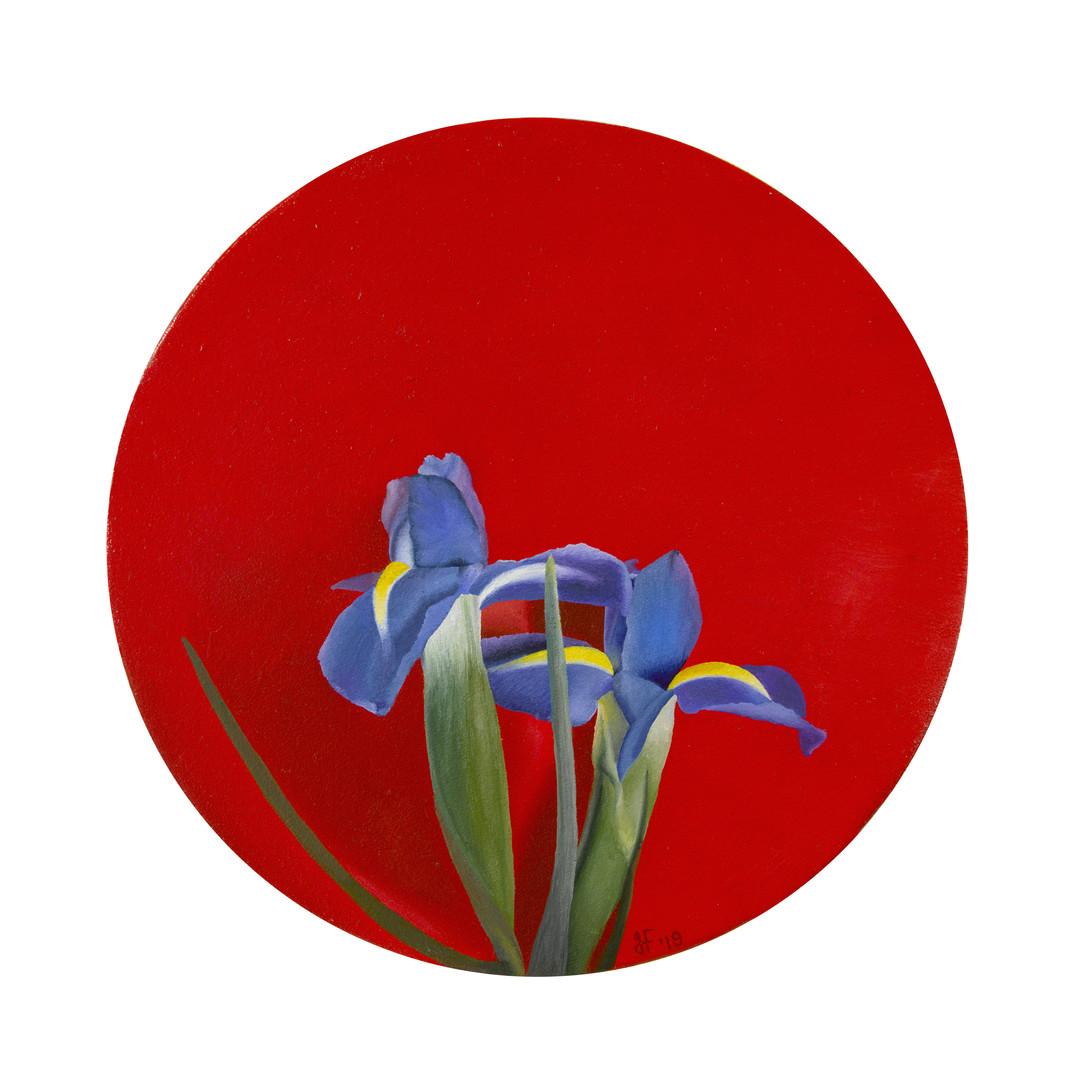 'Convex irises'