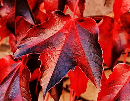 autumn-autumn-colours-autumn-leaves-2357