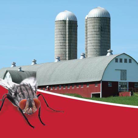 Flies on the Farm: How Farmers Can Help Avoid Them