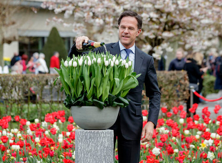 A new veteran tulip called the Don White Tulip!