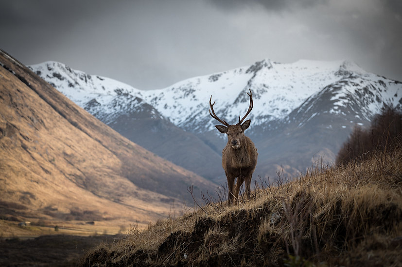 Monarch of the Glen   Glen Etive
