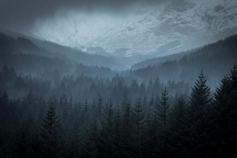 Mist among the trees | Glen Loin